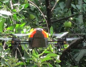 dronewpeartree2
